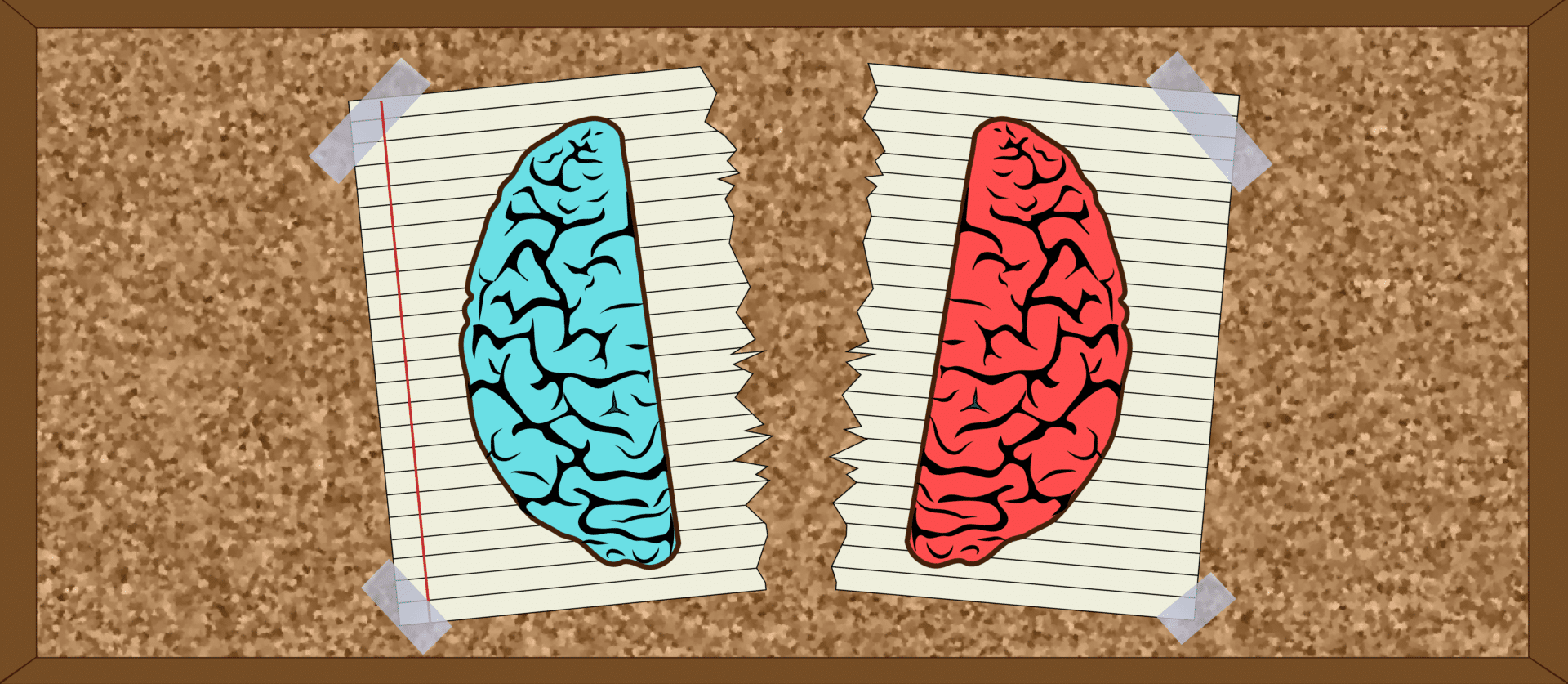 A Picture of the Left Brain and Right Brain Split Symbolizing The Viewpoint Diversity Movement's History